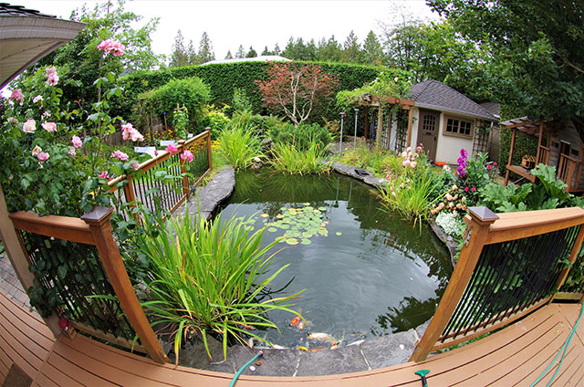 6 reasons to include a pond or water feature in your landscape garden design