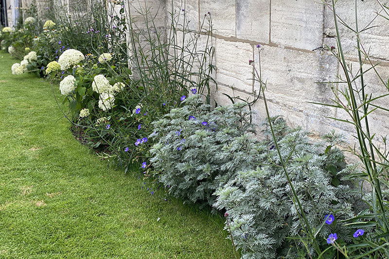 Best Trees for your garden in Bath